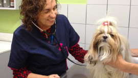 (Foto: Centro Veterinario Super Pet)