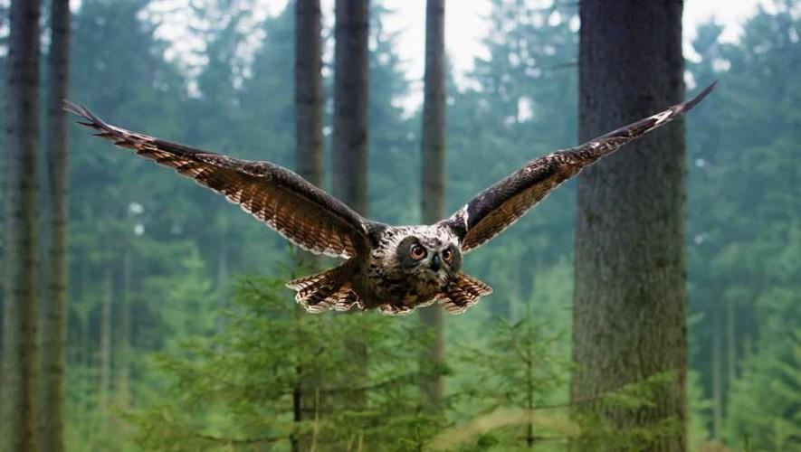 Primer aviario en Guatemala