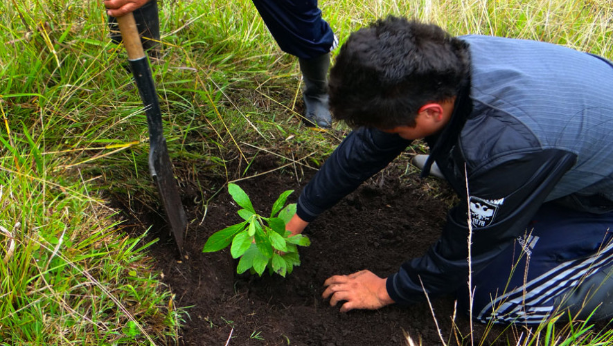 Viaje a Petén para reforestar   Junio 2017