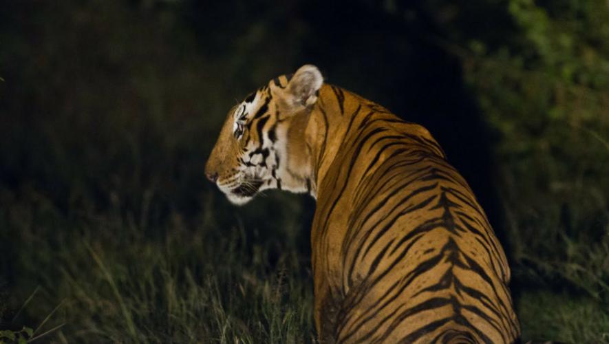 Paseo nocturno en Zoológico Minerva en Quetzaltenango | Junio 2017