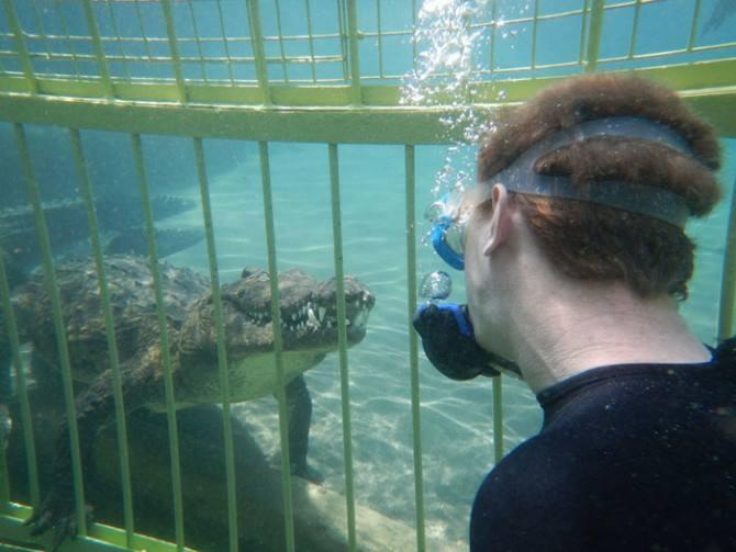 Snuba con caimanes en Chiquimulilla . (Foto: Extraída de Peters Extreme Tours / fotografía con fines ilustrativos)