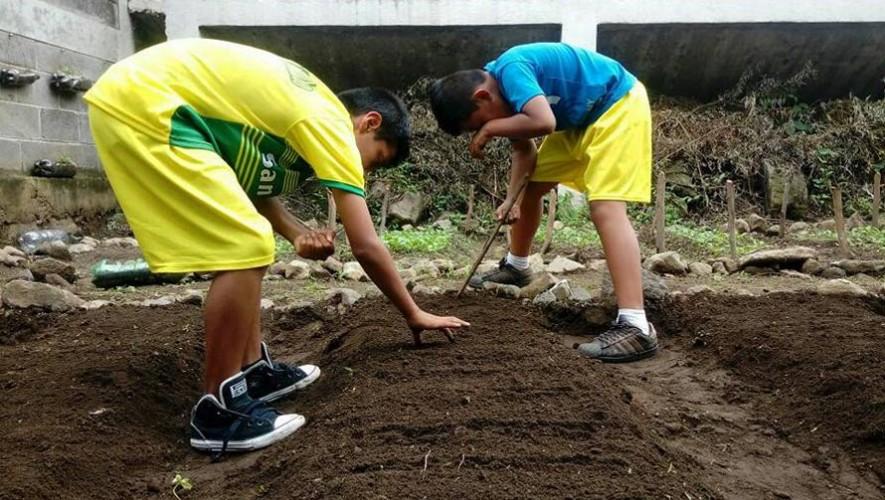 Estudiantes crean huertos ecológicos en escuelas de Sololá