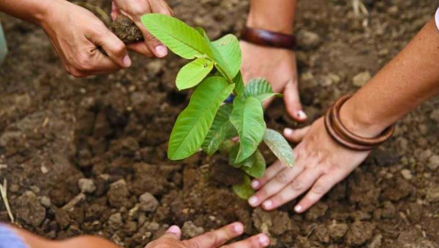 Guatemaltecos sembrarán 8,000 mil árboles en Purulhá, Baja Verapaz