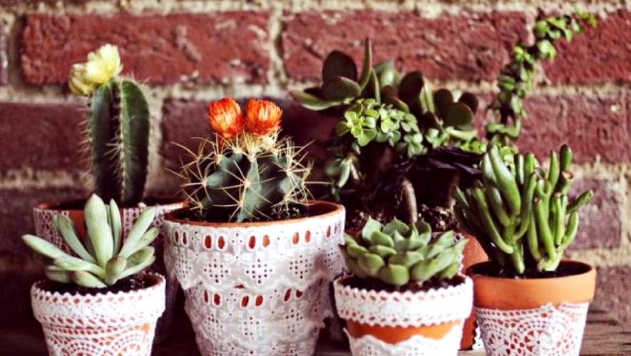 Día del Cactus y Suculentas en Mona Café | Julio 2017