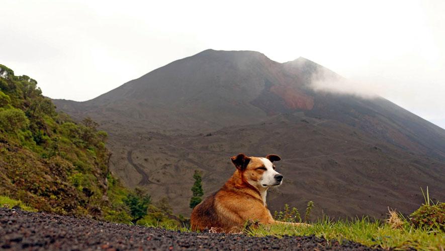Camina en el Volcán de Pacaya con tu perro   Julio 2017