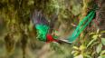 Viaje para ver al quetzal en San Marcos | Agosto 2017