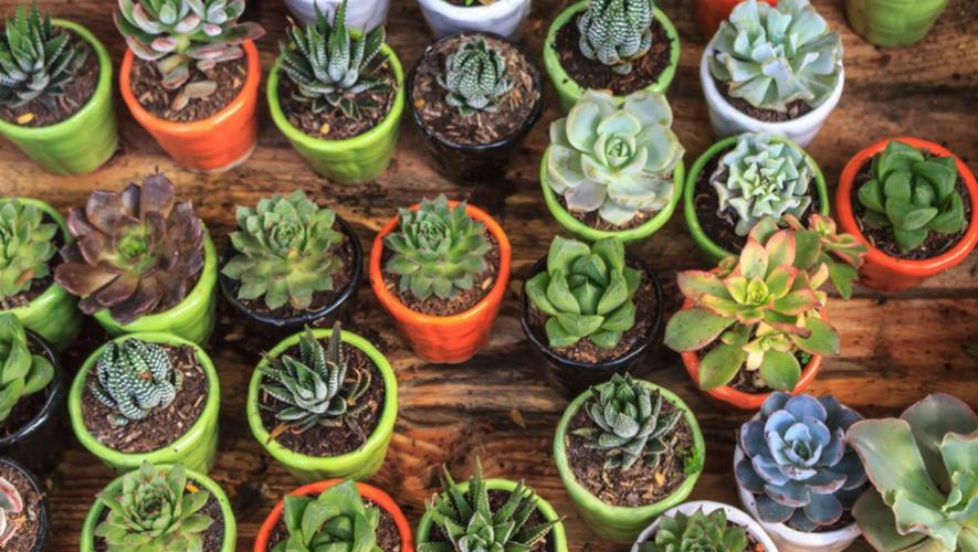 Exposición gratuita de cactus y suculentas en Tikal Futura | Septiembre 2017