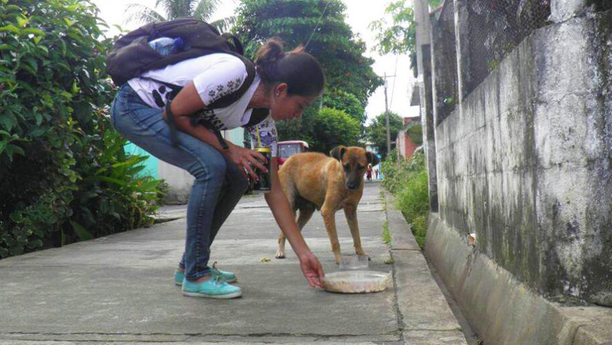 Voluntarios reparten comida para perros sin hogar en Retalhuleu 2017