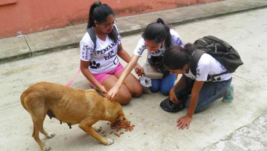 Voluntarios reparten comida para perros sin hogar en Retalhuleu