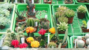 Exposición, compra, venta de suculentas y cactus | Septiembre 2017