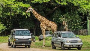 Viaje a Auto Safari Chapín | Agosto 2017