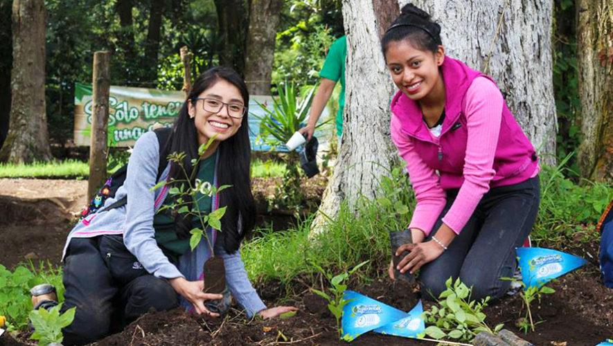 Buscan voluntarios para sembrar árboles en Guatemala, septiembre 2017
