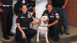 Drago el perro rescatista guatemalteco