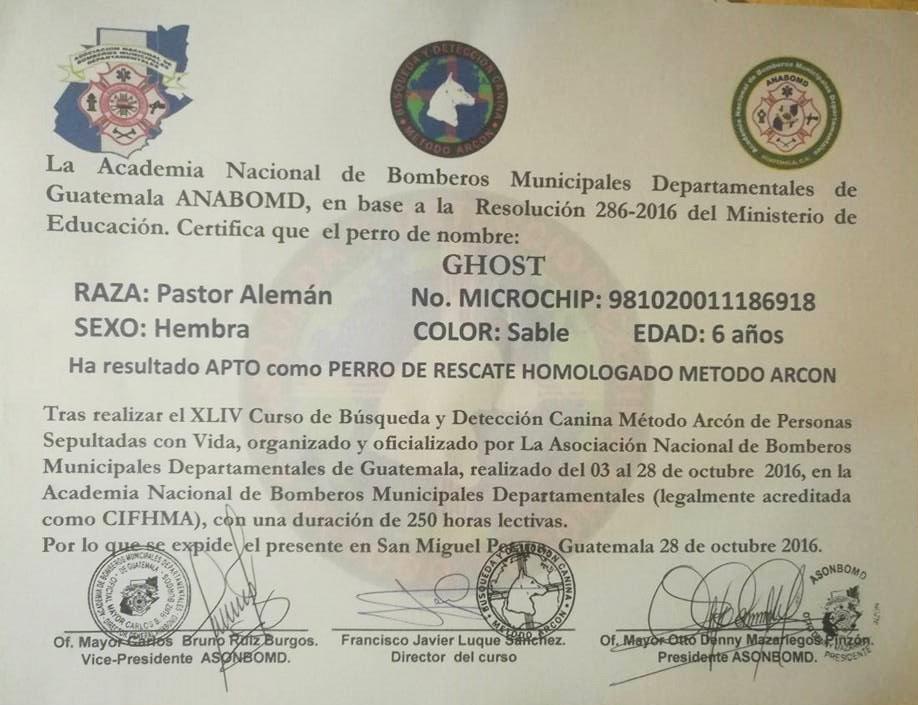Ghost, la perra guatemalteca que apoyará a rescatistas en México