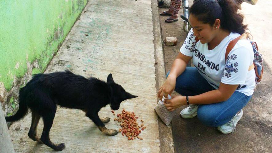 Reparten comida a perros de la calle en municipios de Retalhuleu