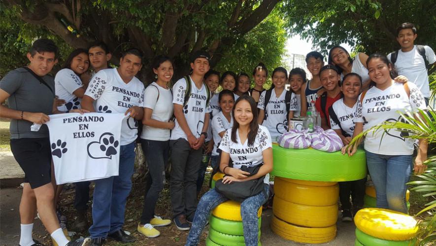 Reparten comida a perros de la calle en municipios de Retalhuleu, Guatemala