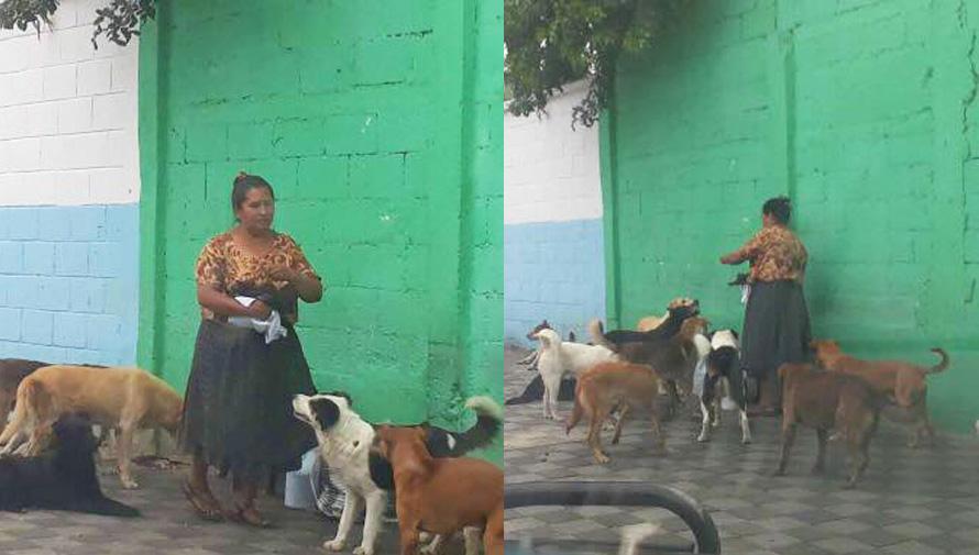 Doña María reparte comida a más de 30 perros sin hogar en Guatemala