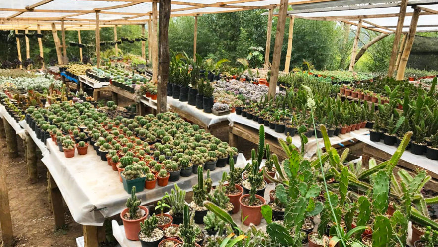 Vivero jahs garden fraijanes lugares tur sticos de for Viveros de olivos