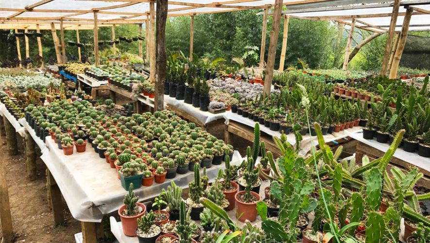 Vivero jahs garden fraijanes lugares tur sticos de for Vivero plantas exoticas