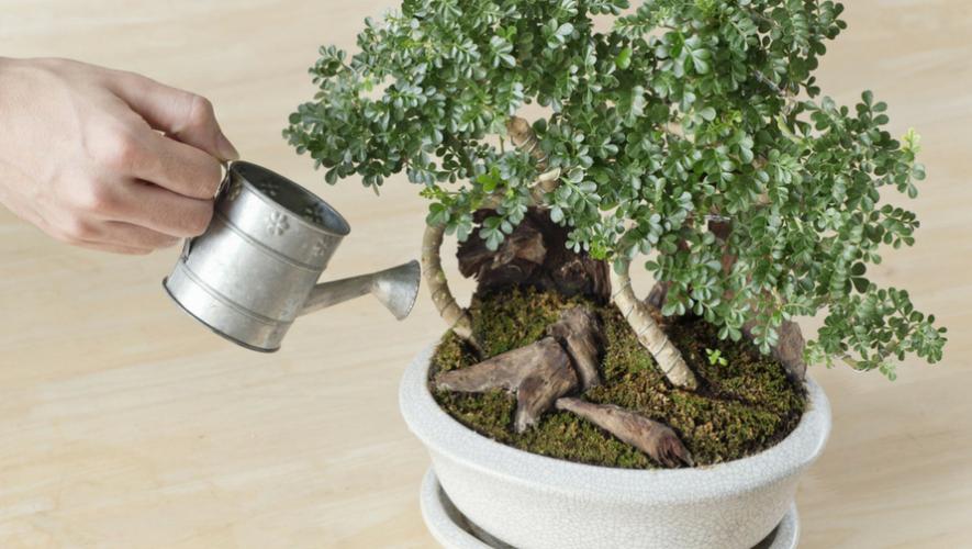 Curso para aprender a hacer bonsáis | Septiembre 2017