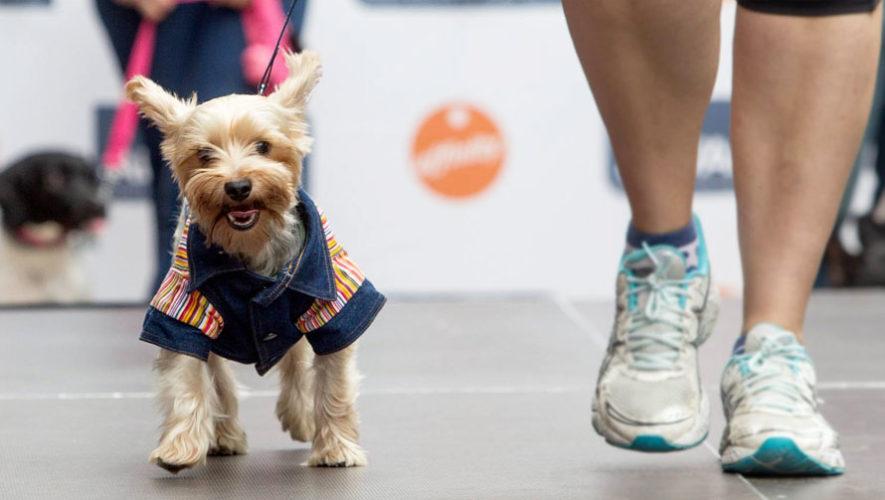 Desfile canino de adopciones | Septiembre 2017
