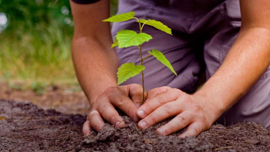 Buscan voluntarios para sembrar 4,000 árboles en San Agustín Acasaguastlán