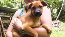 Jornada de castración para perros y gatos en la Ciudad de Guatemala