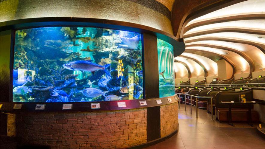 Nais Aquarium Restaurante Rodeado De Peceras Lugares Para Hacer