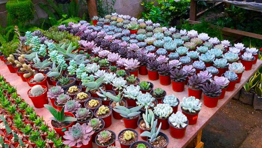 Vivero san crist bal variedad de flores ex ticas for Plantas de vivero