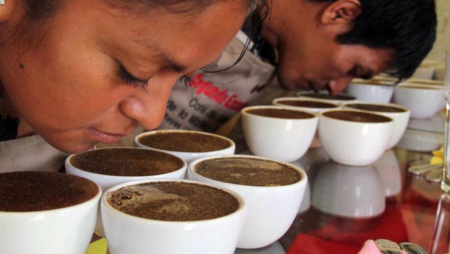 Taller básico de catación de café de Anacafé | Octubre 2017