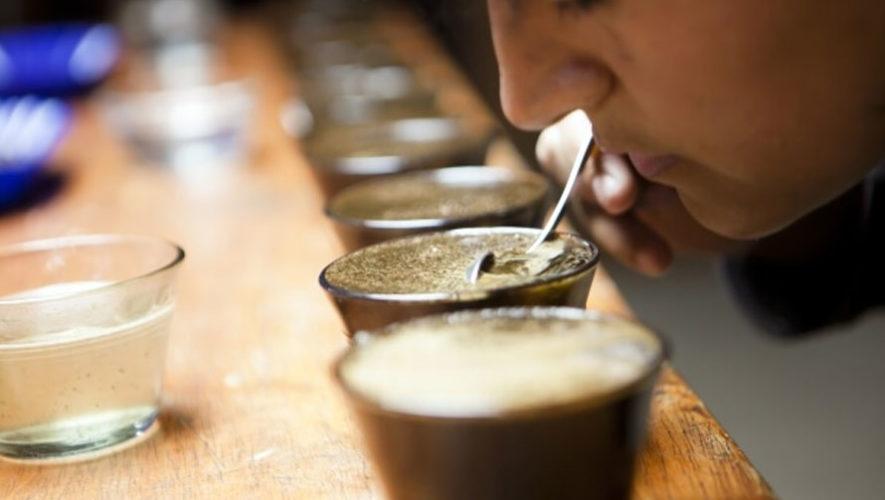 Tour gratuito de café en Majadas Once | Octubre 2017