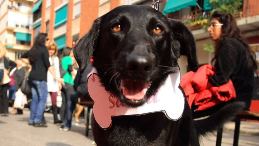 Pasarela de disfraces y adopción de perros | Octubre 2017