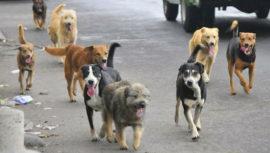 Guatemaltecos alimentarán a perritos de la calle