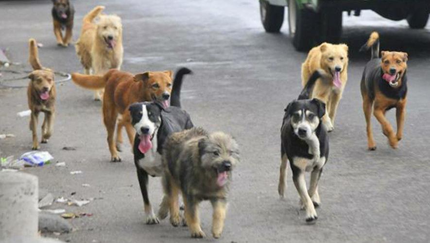 Resultado de imagen para perritos en la calle