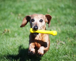 (Foto: Jolly Pets)