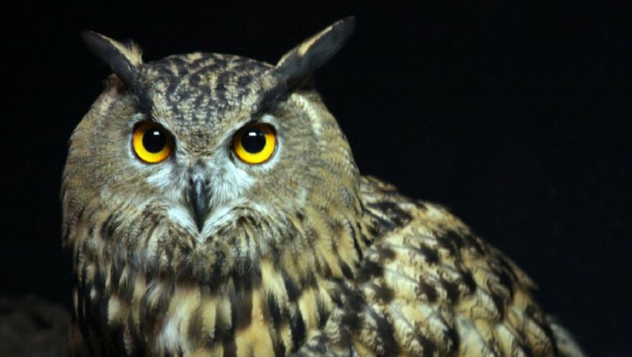 Recorrido nocturno en Zoológico Minerva, Quetzaltenango | Noviembre 2017