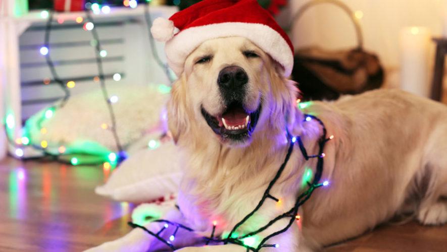 Convivio y bazar navideño para mascotas   Diciembre 2017