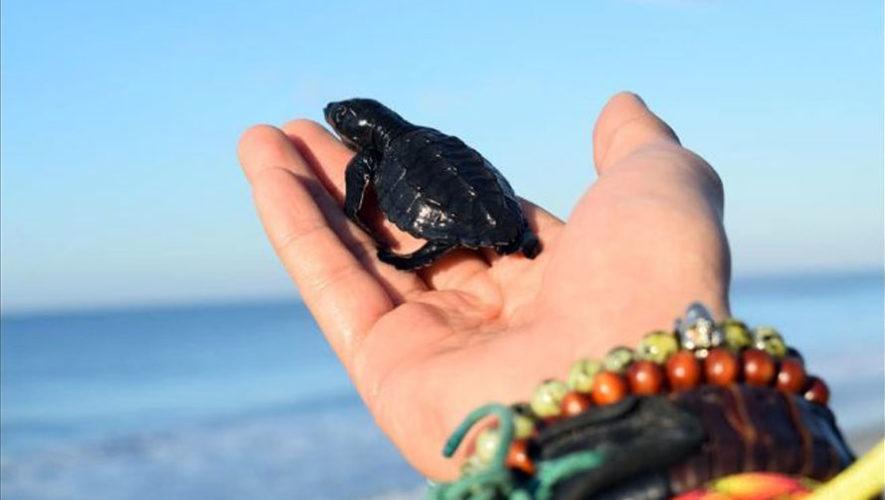 Tour de liberación de tortugas   Diciembre 2017
