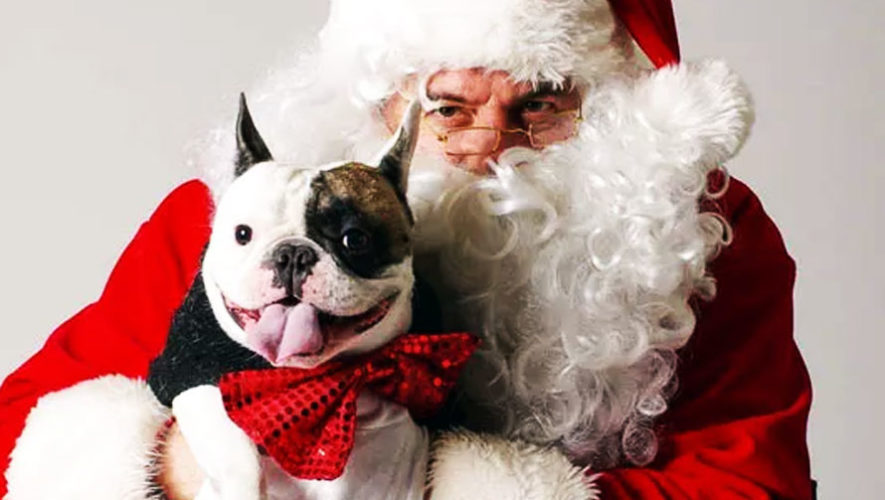 Bazar benéfico navideño para perros   Diciembre 2017