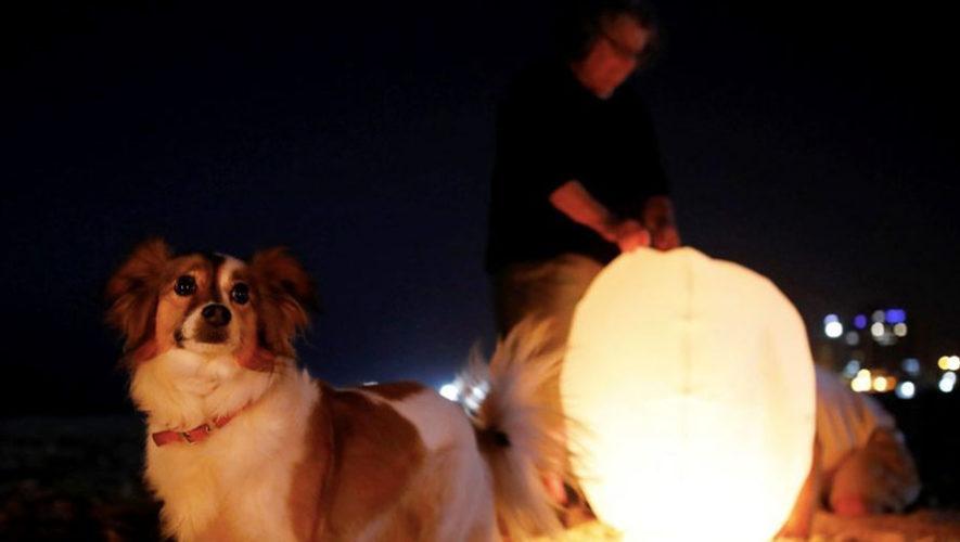 Liberación de globos junto a tu mascota en Ciudad de Guatemala | Noviembre 2017