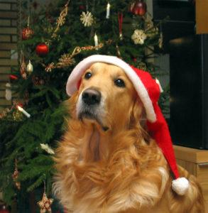 (Foto: Christmastreetruck)
