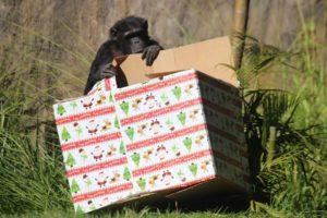(Foto: Celebración de Navidad para animales del Zoológico)