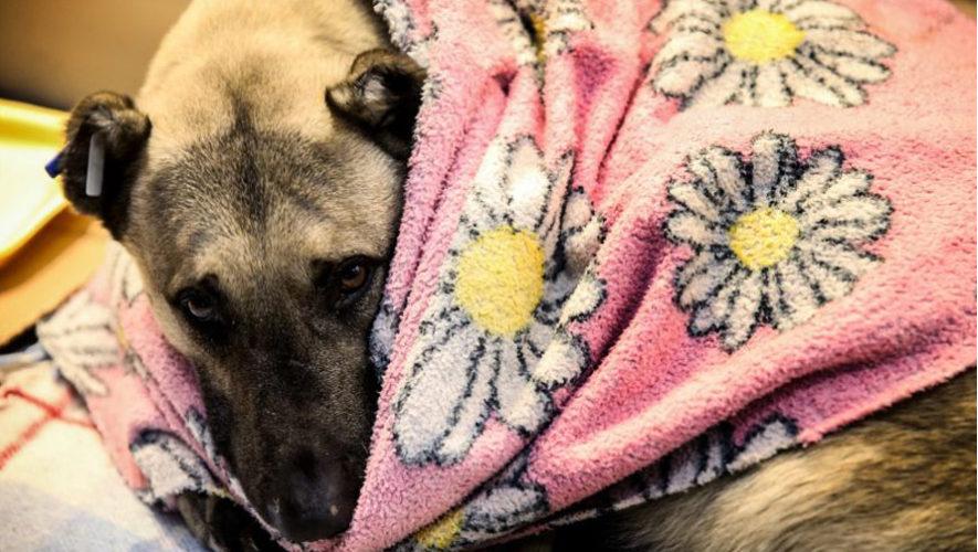 Dona ropa para perritos rescatados en la Ciudad de Guatemala