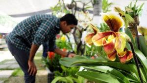 XLV Exposición Nacional de Orquídeas en Guatemala | Enero-Febrero 2019