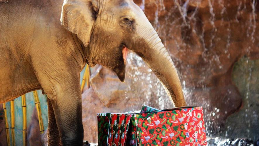 Celebración de Navidad para animales del Zoológico | Diciembre 2017
