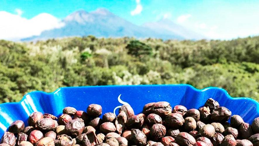 Los productos que Guatemala exporta a estos 32 países