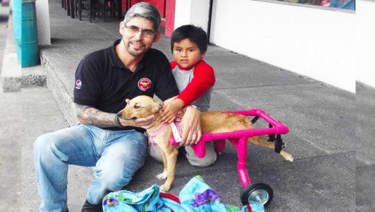 Luis Aldana crea sillas de ruedas para mascotas en Guatemala