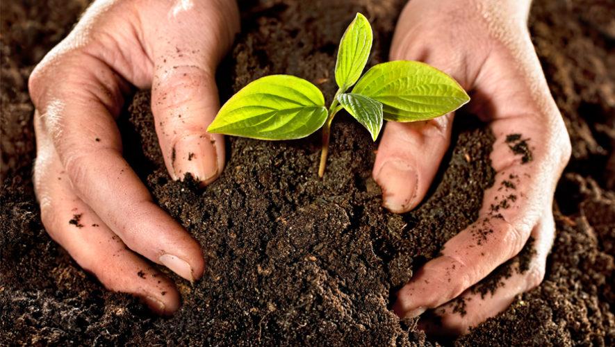 NutriSuelos se dedica a crear abono natural de desechos orgánicos
