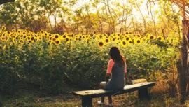 Increíbles campos de flores en Guatemala