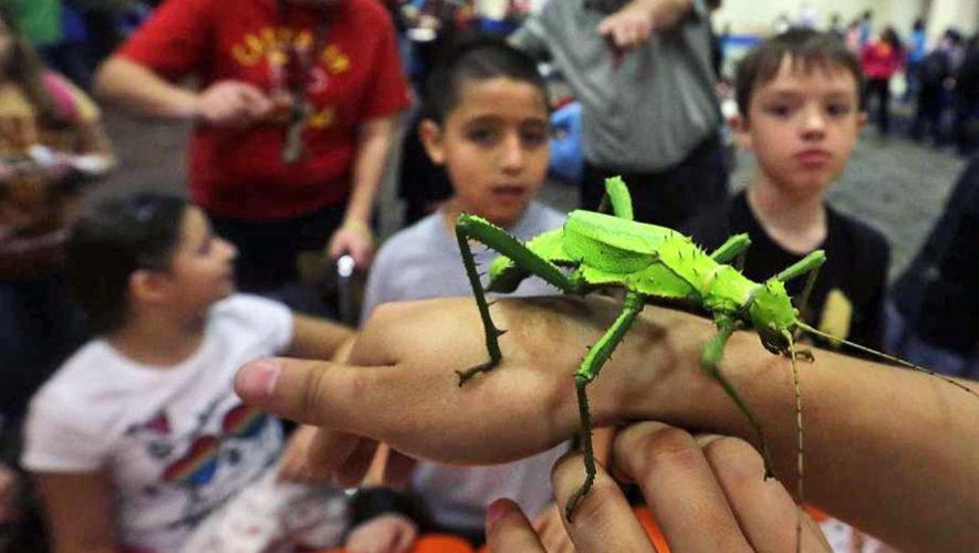 Presentación de libro infantil sobre insectos en Guatemala | Junio 2018